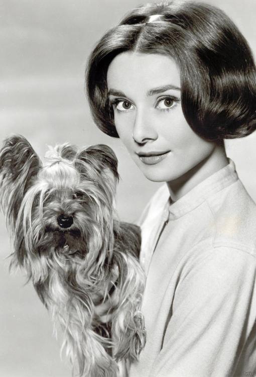 Одри Хепберн с собачкой на руках