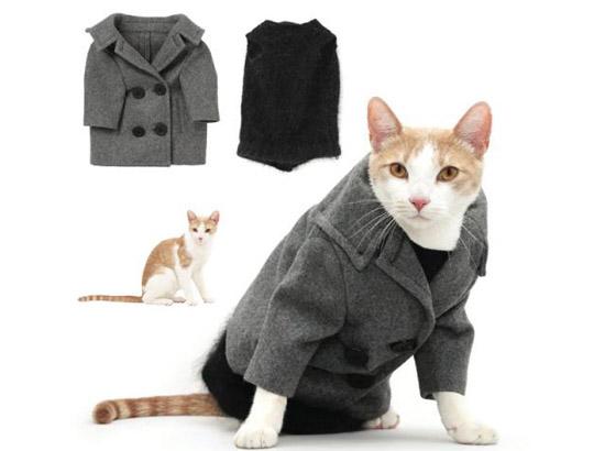кошка в пальто
