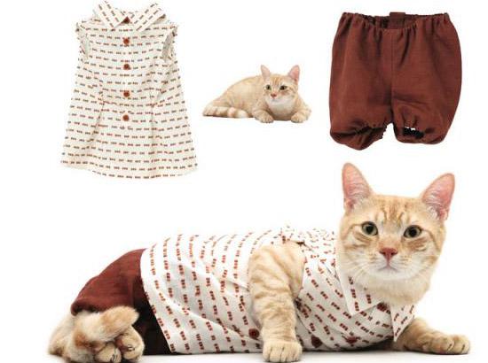 кошка в красных панталончиках
