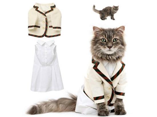 кот в пиджаке