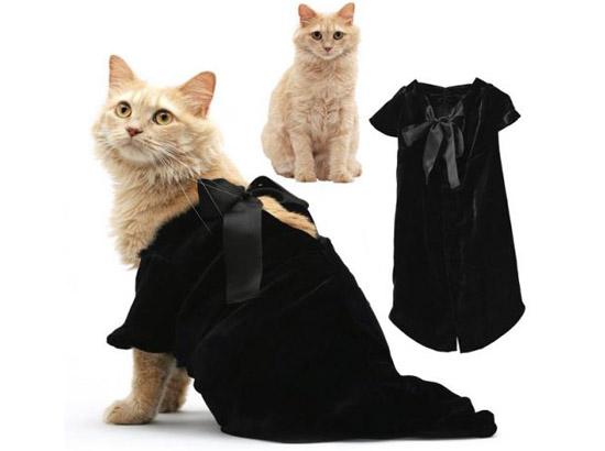кошка в черном платье