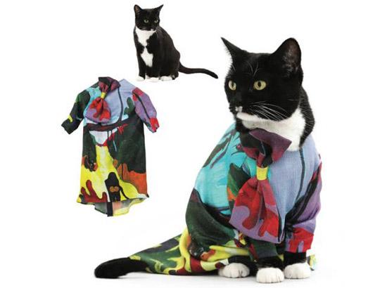 кошка в ярком платье