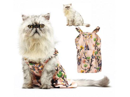кошка в нежном платьице