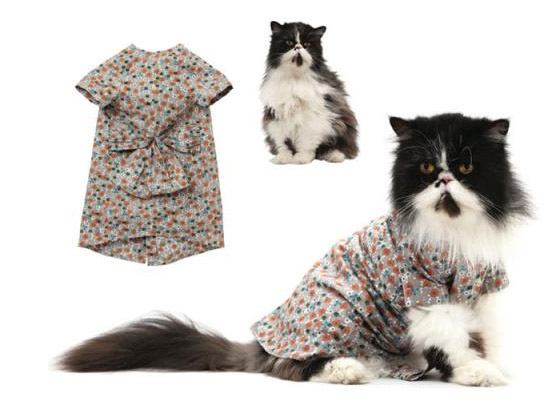 кошка в пестром платье