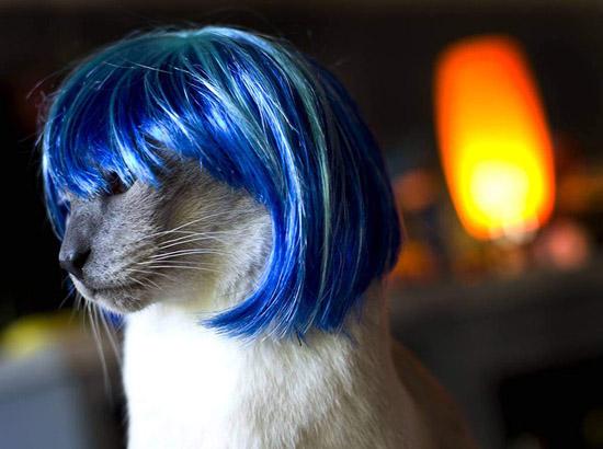 кот в синем парике