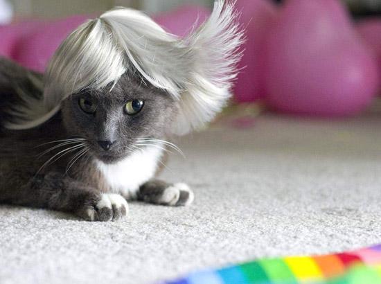 кот в пепельном парике