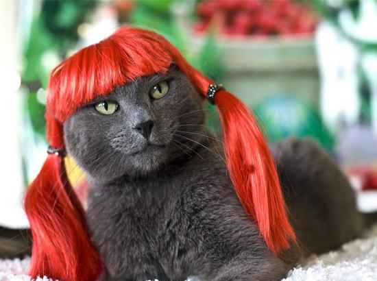 кот в рыжем парике