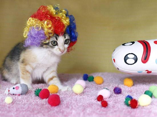 котенок в ярком парике