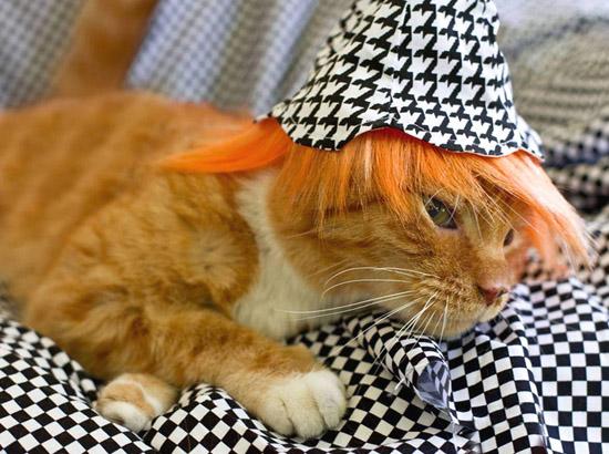 кот в ярко-рыжем парике и шляпке