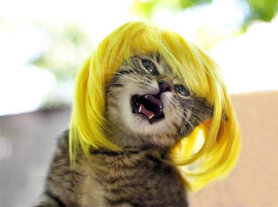 кот в желтом парике